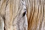 Persoonlijke mix paard