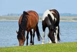Verhuizing paard