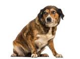 Trauma hond
