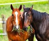 Verlies vriendje paard