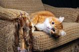 Overmatig krabben kat