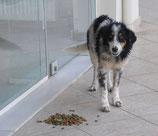 Patenschaft Hund 1 Monat