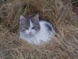 Patenschaft Katze 1 Monat