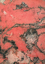 Weinberger (Lois Weinberger - Ausstellung in der Galerie Krinzinger) 1989/1990.