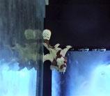 Antennarius maculatus, gefleckter Anglerfisch