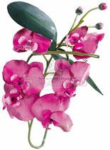 Orchideenzweig mit Blüten