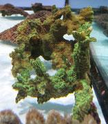 Hydnophora sp, Pickelkoralle