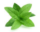 Pfefferminzhydrolat Bio 100 ml