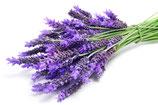 Lavendel mont blanko