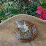 Ammonite Opalisée