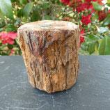 Bois Fossilisé Arizona N° 2