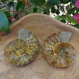 Fossile d'Ammonite sciée et polie 4