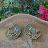 Fossile d'Ammonite sciée et polie 2