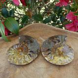 Fossile d'Ammonite sciée et polie 3