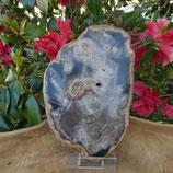 Bois Fossilisé Arizona N° 1