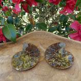 Fossile d'Ammonite sciée et polie 6