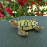 Petite tortue marine