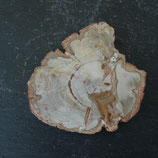 Bois Fossilisé de Madagascar N° 2
