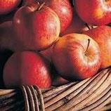 Apfel-Meerrettich