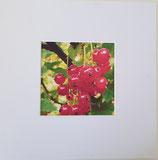 Naturimpression Rote Johannisbeere