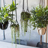 workshop planten hanger