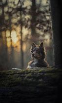 Bildbearbeitung Hunde 4