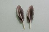 2 petites plumes rigides gris & blanc