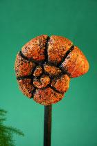 Minischnecke aus Keramik, orange-rötlich