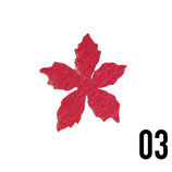 stella alpina piccola-conf. 4 pz