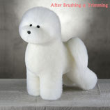 Bichon Model Dog ホワイト毛