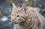 """Tierkommunikation """"Vermisstes Tier"""" (1 Update kostenlos)"""