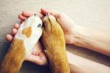 LIVE-Tierkommunikation vor Ort / Anzahlung
