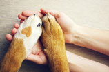 Modul 3P / Passerelle Tierkommunikation