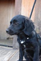 Hundekette Howlith - weiss & silberfarben