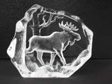 Elch aus Kristall, Wildlife Målerås