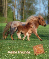 Meine Freunde / Fans of earth (Ponys)