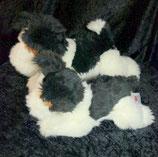Baby Club Hund Terrier? liegend 23 oder 32 cm