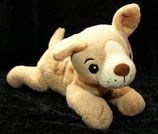 TCM sooo süßer Hund Chiwawa /  Chihuahua