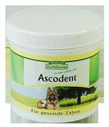 Ascodent
