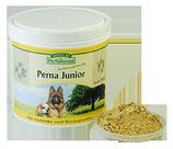 Perna Junior