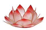 Lotus Lichter