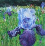 Iris bleu, 40 x 40 cm