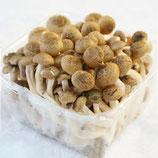 Brau Mushroom 150g