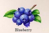 e-cig company Blueberry(ブルーベリー) 30ml
