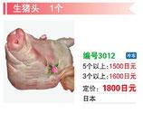 生猪頭 | 冷凍豚頭