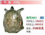 甲魚 | 冷凍すっぽん