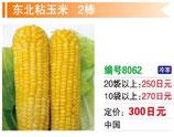 東北粘玉米| もちコーン