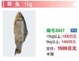 鯽魚 | 冷凍フナ