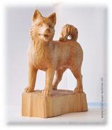 Schlittenhund (Samojede)