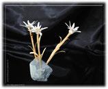 drei Edelweiss auf Stein